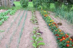 jardin et jardinage
